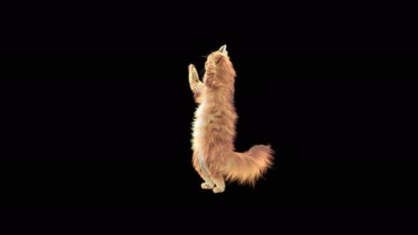 Cat Cheering 4K