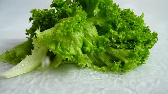 Thumbnail for Washing of Lettuce Leaves 4