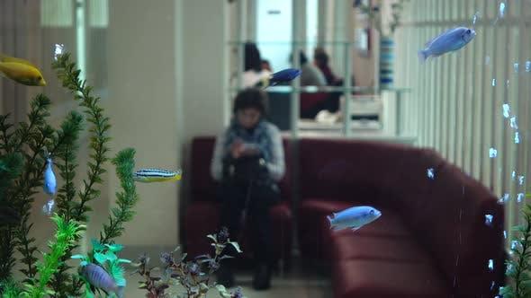 Thumbnail for Aquarium in Dental Clinic