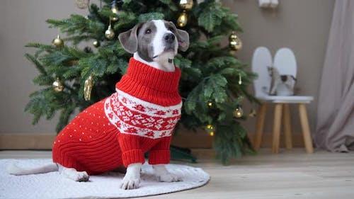Winter Family Holidays Celebrations