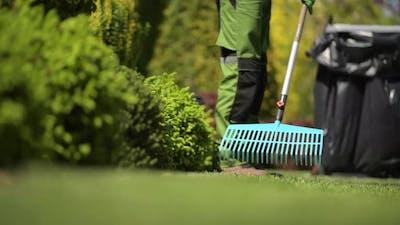 Professional Gardener Raking Grass in a Backyard Garden.