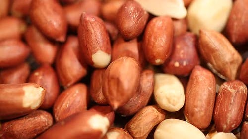 Peanuts for Nutrient Butter, Source of Oil for Industrial Use, Groundnut Harvest