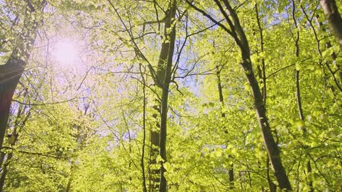 Sun Beaming Directly To the Forest with Trees of Varying Heights