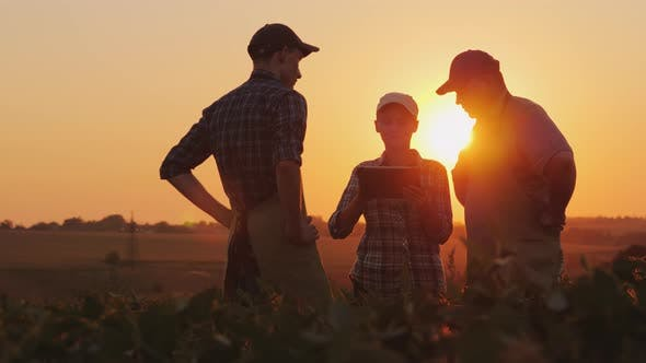 Thumbnail for A Group of Young Farmers Working in the Field at Sunset, Using a Tablet