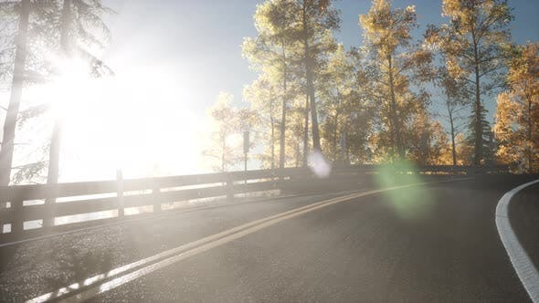 Thumbnail for Road in the Forest