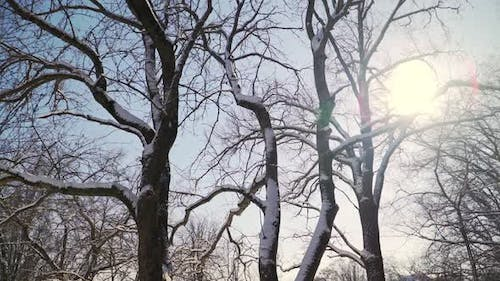 Beautiful snowy forest on a bright Sunny winter day. The ice on the branches of trees. Slow motion