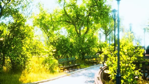 Thumbnail for Peaceful Park in the City