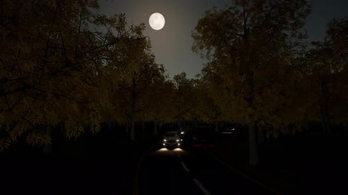 Night Traffic Moon in Forest Bright Star