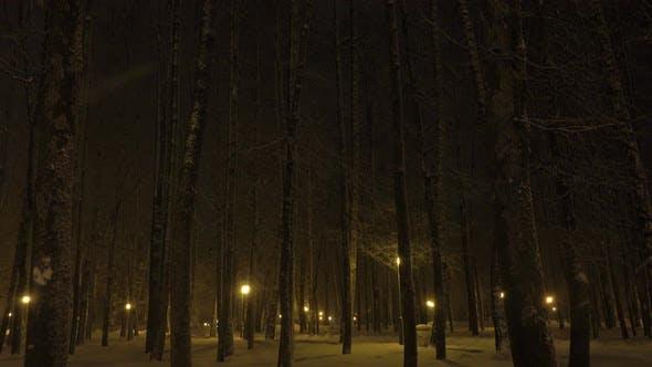 Thumbnail for Snowfall in Beautiful Winter City Park.