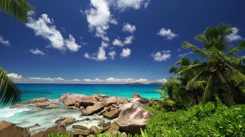 Only Nature of Tropical Island