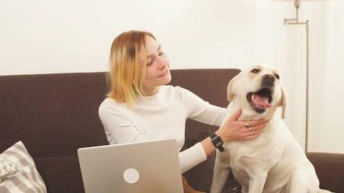 Modernes junges Mädchen, das hinter einem Laptop von der Arbeit abgelenkt wurde, um ihrem Haustier Zuneigung zu zeigen
