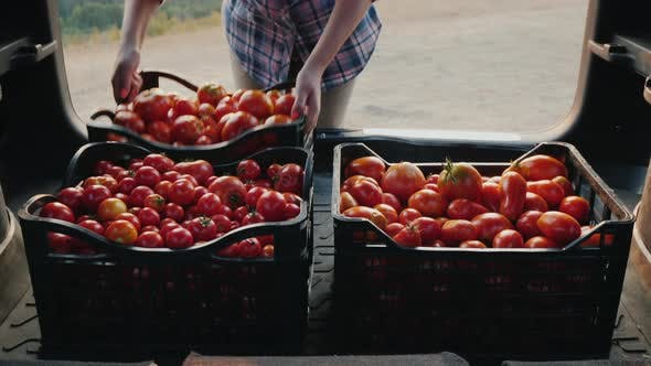 Thumbnail for Farmer Puts Boxes of Tomatoes in the Trunk of a Car