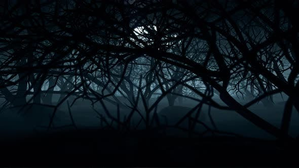 Cover Image for Halloween In Night Forests 03 4K