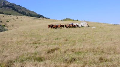 Forward Panning Shot of Wild Horses on a Hill on a Sunny Day