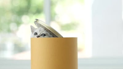 Cute Kitten Palying In A Cylinder Box