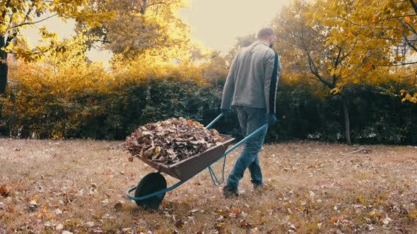 Thumbnail for Garden Worker Pushing a Wheelbarrow Filled with Dry Leaves and Tree Branches To the Trashcan
