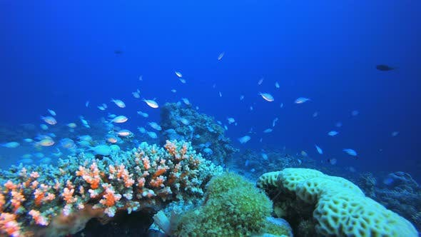 Cover Image for Marine Coral Garden Blue Orange Fish