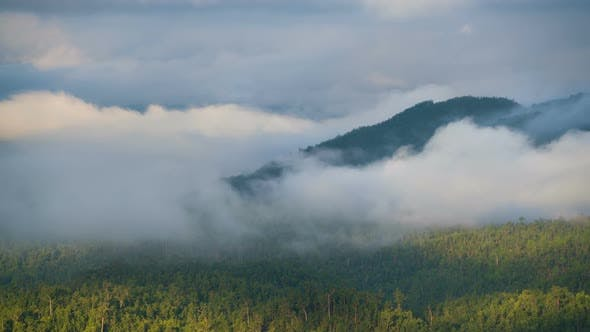 Thumbnail for Mist Moves Above Tree Forest At Mountain