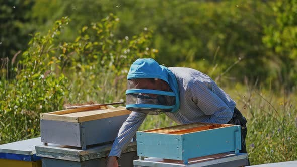 Beekeeper on the apiary