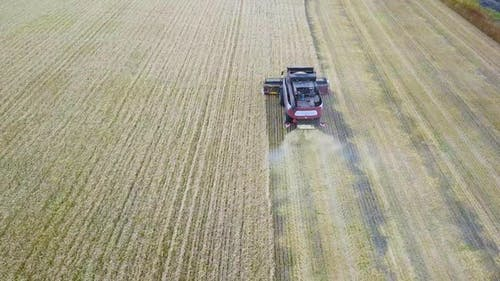 Combines Harvest Sunflower During the Day. Aerial Shoot