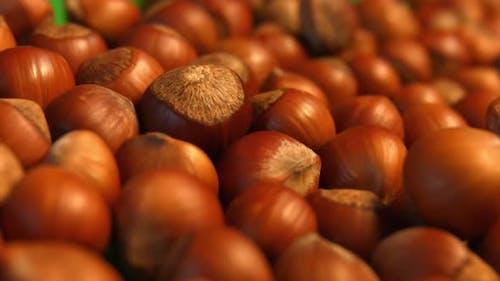 Hazelnuts on Green Background