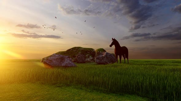 Lonely Horse at Sunset