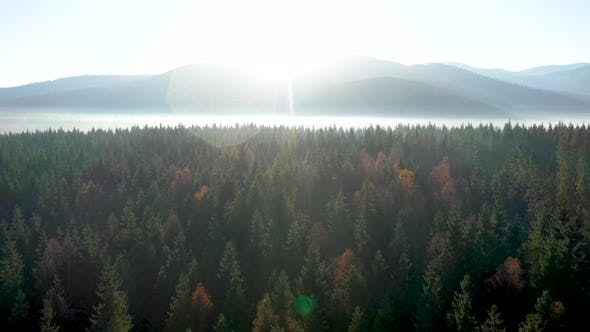 Thumbnail for Aerial View of Mist and Morning Haze Over Virgin Forest