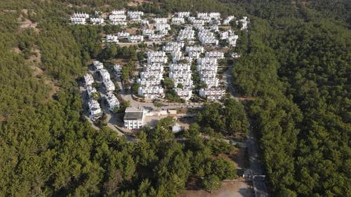 Architecture Forest Pine Aerial