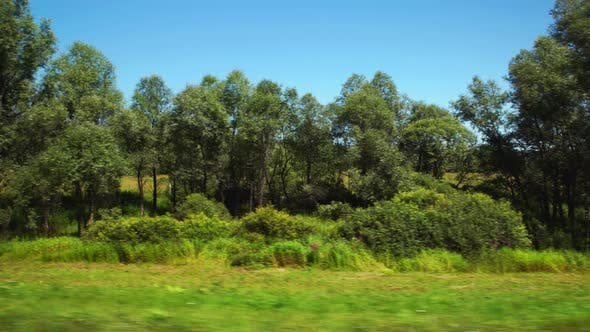 Thumbnail for Moving along a field with a low trees