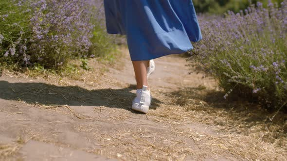 Thumbnail for Female Legs Walking Through Lavender Field