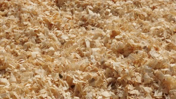 Thumbnail for Energy source in wooden sawdust 4K 2160p 30fps UltraHD  panning footage - Close-up of scobs made aft