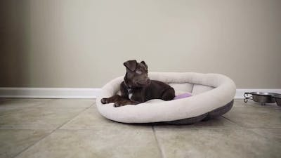 Puppy In His Bed