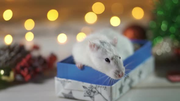 Thumbnail for Christmas Rat Symbol of the New Year 2020. Year of the Rat. Chinese New Year 2020.