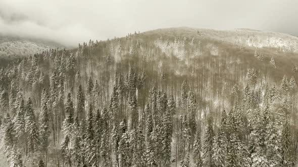 Thumbnail for Flight Over Forest In Winter