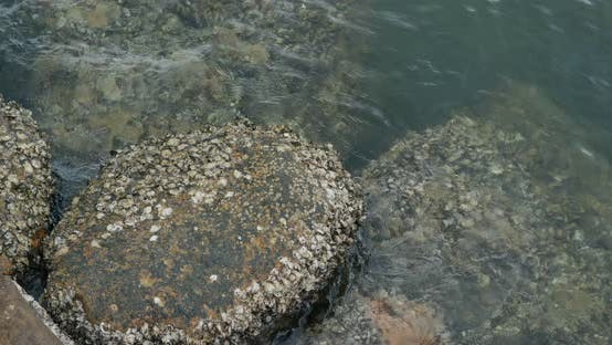 Thumbnail for Sea coast with rock and stone