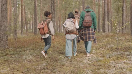 Backs of People with Backpacks Hiking in Forest