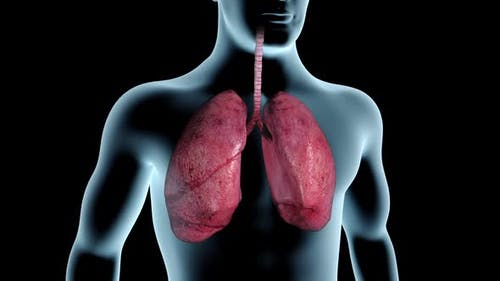 Lungs Blackened By Cigarette Smoke