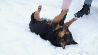 Playing with Pets in the Snow