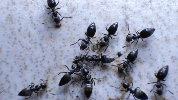 Ants Attracted to Food