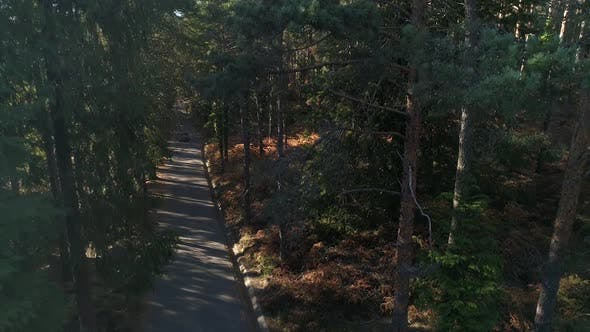 Thumbnail for Adventure Car Crossing Forest Road