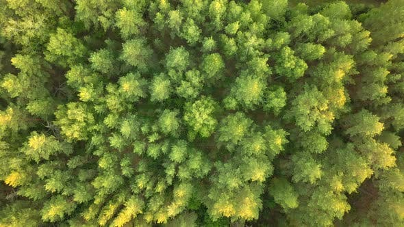 Thumbnail for Forest From Above