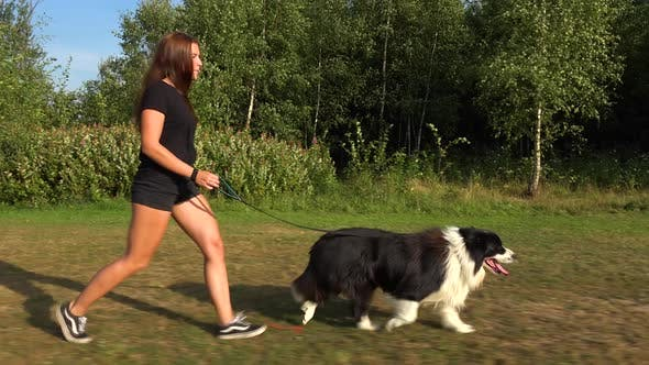 Cover Image for A Young Woman and Her Border Collie Walk Across a Meadow in a Forest - View From the Side