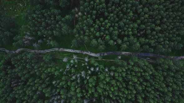 Thumbnail for View From Above In The Forest