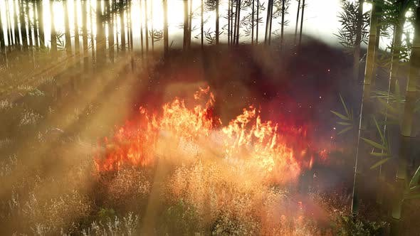 Thumbnail for Wind Blowing on a Flaming Bamboo Trees During a Forest Fire