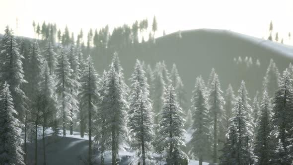 Thumbnail for Luftaufnahme des Waldes während des kalten Wintermorgens