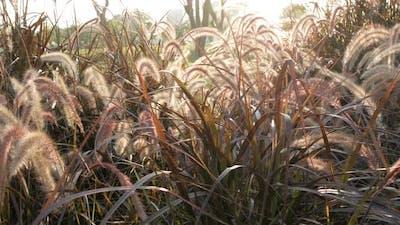 Grass Sunshine