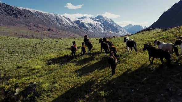 Thumbnail for Wild Horses Running, Herd of Horses Running on the Steppes in the Background Mountain