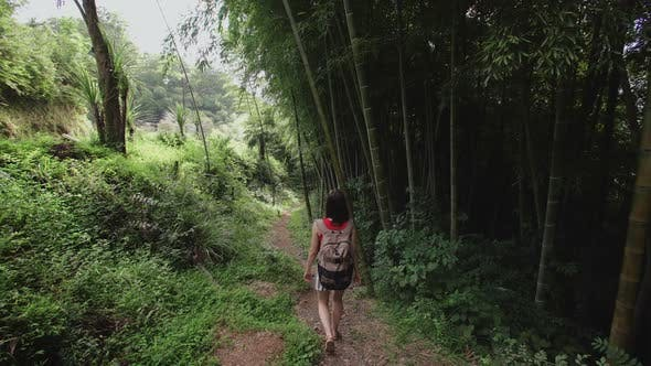 Cover Image for Travel Girl with Bag Walks Along Path in Tropical Park of Tropical Plants, Palms, Bamboo Plantation