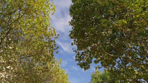 Thumbnail for Walking in Autumn Park. View To the Sky and Tree Tops