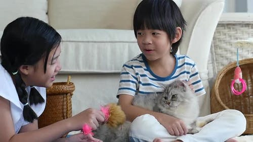 Asian Children Playing Persian Cat In Living Room